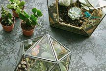 Plantes - Collection ethnique