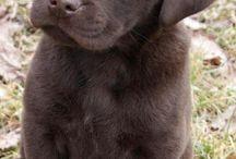 Mascotas lindas :)