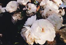 Fotografíasϟ / Aquí encontraran fotografías sacadas y editadas por mi, la mayoría las comparto en mi blog o instagram.