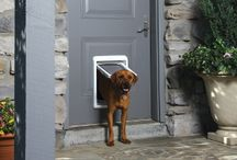 Tech for the Pet-Friendly Home