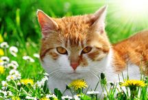 I HEART CATS. / by Nikki James