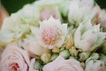 Flowers: Blushing Bride