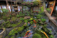 koi en ponds in japanese garden / by verheyen maria