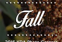 2016 KDA Photo Contest: Fall / Repin your favorite fall photos to vote!
