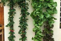 hidroponia, jardín vertical