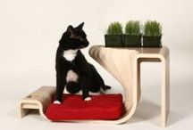 Pet Architechture / 