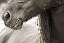 Magic of Horses