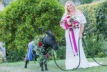 Fantasy Donkeys Events