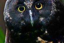 Owls <3 <3
