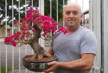 MEUS BONSAI / Meus trabalhos com bonsai.