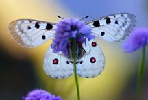 Butterflies / One of my favorite creatures is the butterfly. I love to collect anything butterfly.