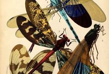 insects / by Jerry Tyson