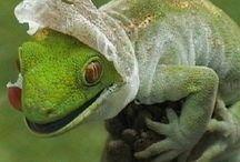 Lizards and geckos