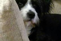 puppy / Puppy