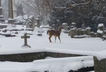 ✞ Cemeteries ✞