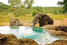 Best Swimming Pools in Africa
