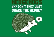Hedgehogs / by Lindsay Alcock