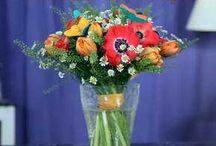 Флористика (floristics)