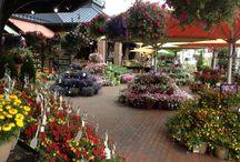 SPRING SEASON / Garden Center outdoor product
