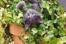 macskák vicces helyzetekben 1