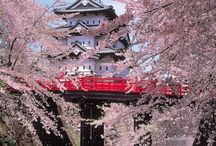 Interesting Spots in Japan !
