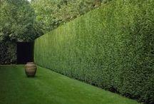 Grön växtvägg