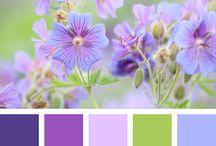 kompozycja kolorów
