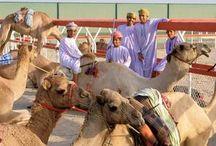 Oman / Oman met Talisman travel design; unieke belevingen en wijk van de gebaande paden!