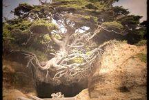 DRZEWO -TREE