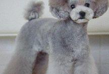Poodle Cuts