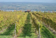 Let there be wine and more wine / Wine vineyards  / by Inez Samantha C