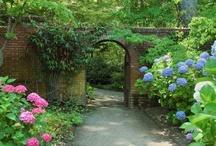 Garden Ideas / by Giniene Kamps