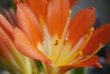 Kwiaty wokół nas / o kwiatach