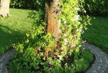 puun ympärillä