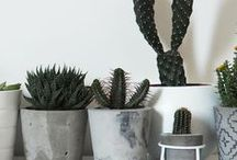 diy pot plants