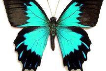 Butterflies ★