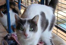 Cats !  Katten ter adoptie ! Animals in Distress Spanje