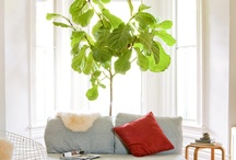living rooms / by Ann Yates Pate