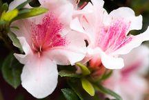 Kukkia