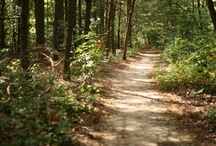 Adkins Trails / Open Tuesday - Saturday 10-4