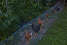 Backyard chickens Coops idea
