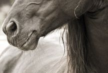 Horses <3 / by Sydney Strickland