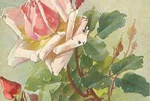 Roses / art, inspiration, growing tips, all about the rose