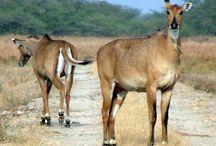 Rich Indian Wildlife