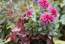 Plant pots and containers / Planting ideas and inspiration for pots and containers in the garden. Ideal for a small space.