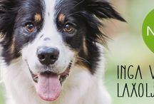 Nutrolin på svenska / Inga vanliga laxoljor! Finlands mest betrodda fettsyretillskott gör en otrolig skillnad i din hunds liv. Baserar sig på forskning & 100 % naturliga råvaror.