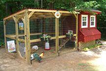 Chicken coop n gardens