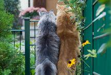 Funny Fauna / Доброе и смешное в животном мире