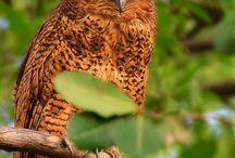 Birds / owls