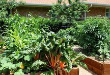 Plant Grow Eat